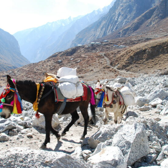 langtang gosainkund trekking