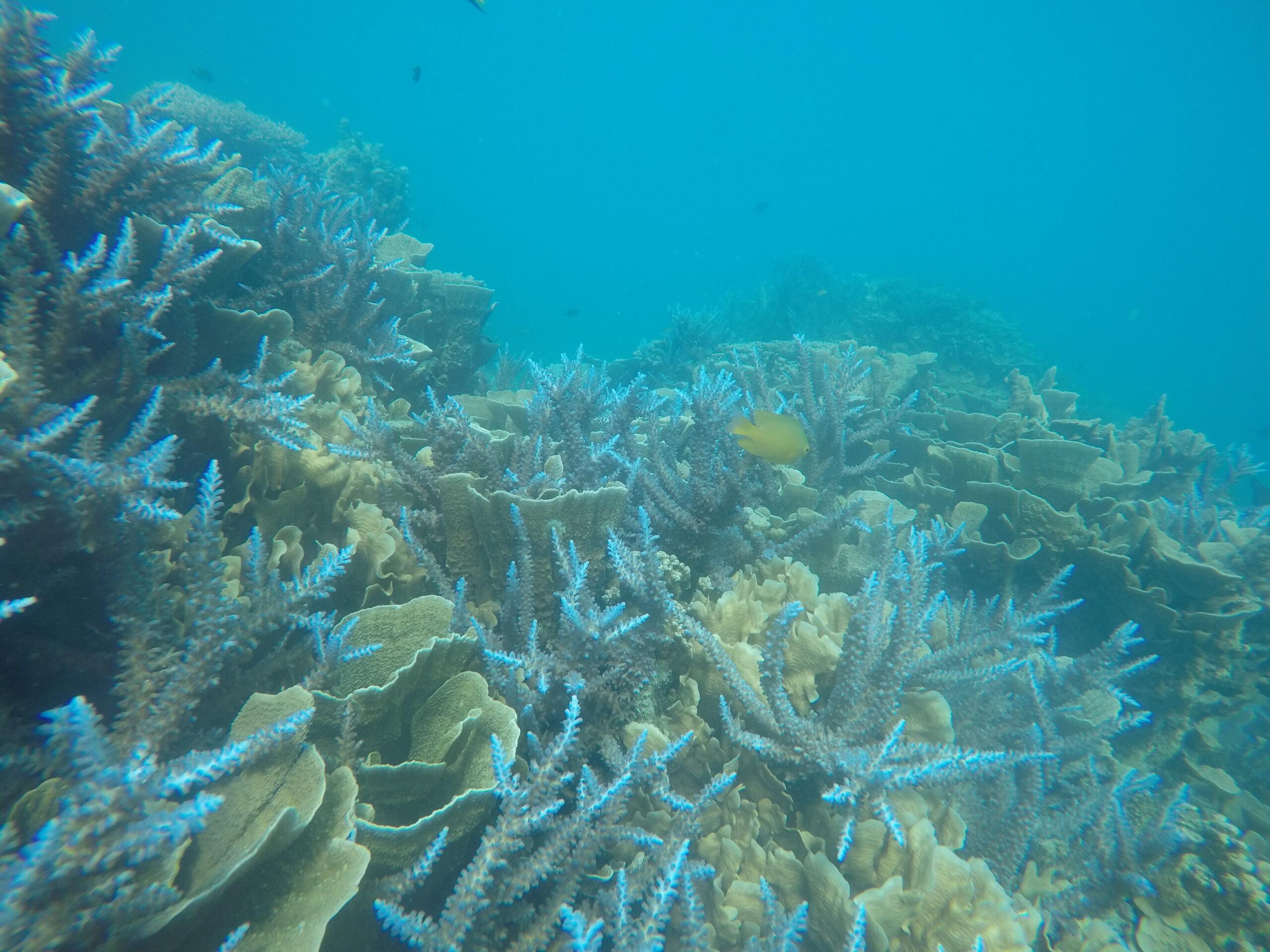 snorkelen Indonesië