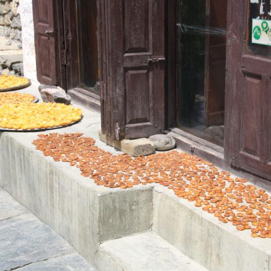 fruit nepal