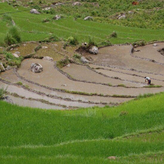 reizen naar bhutan