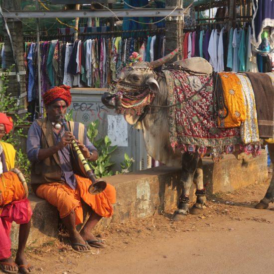 privé reizen india
