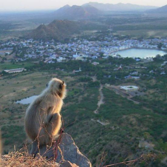 Indië reis