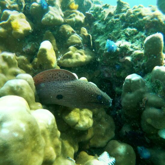 snorkelen myanmar