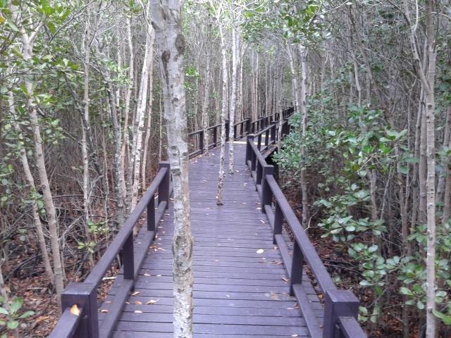 mangrove Thailand reis